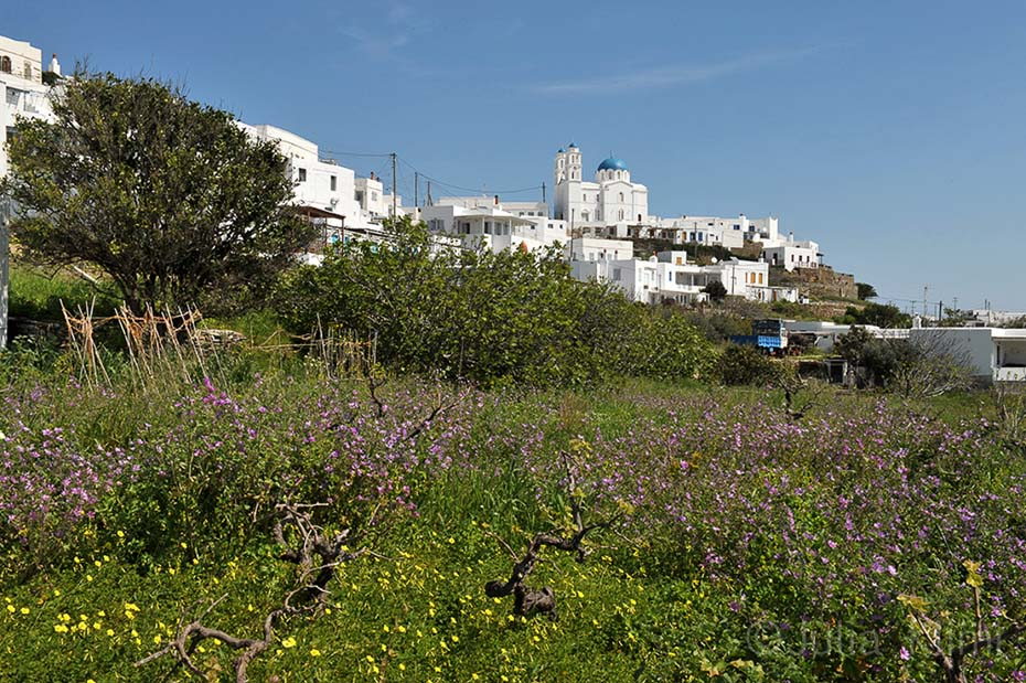 _45DSC_1619 Ai Yiannis Pano Petali, Sifnos island