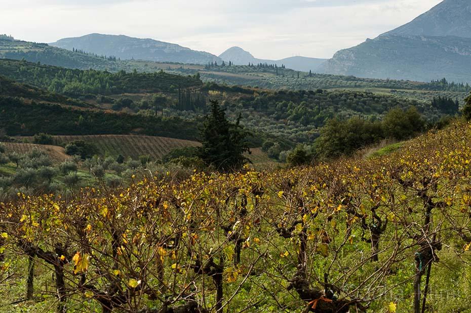 DSC_6697 Tselepos vineyards