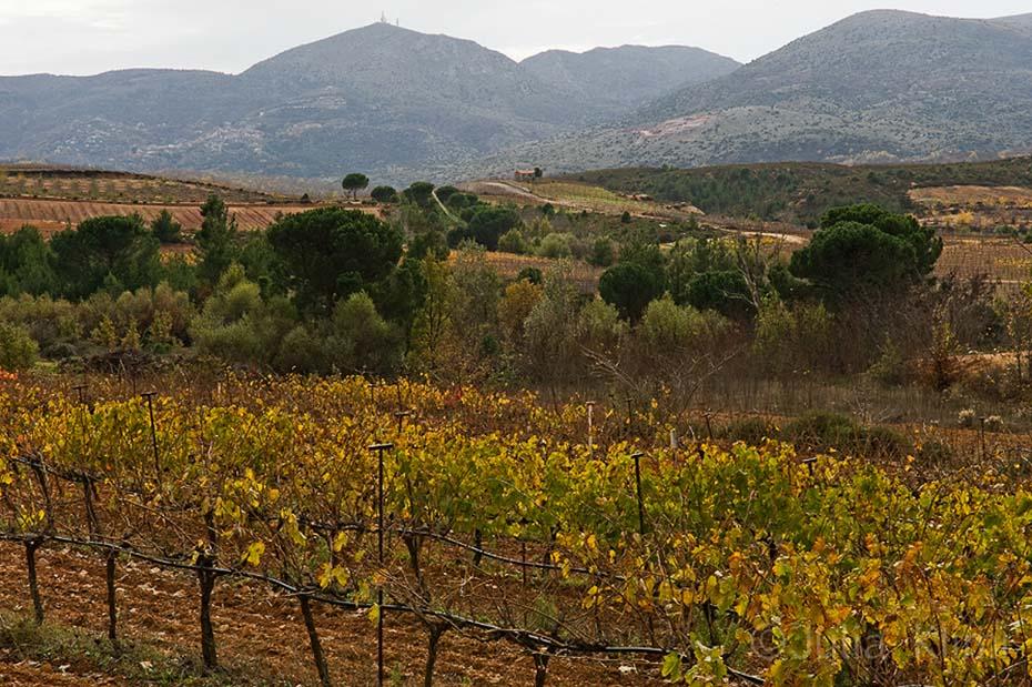 DSC_6848 Tselepos vineyards