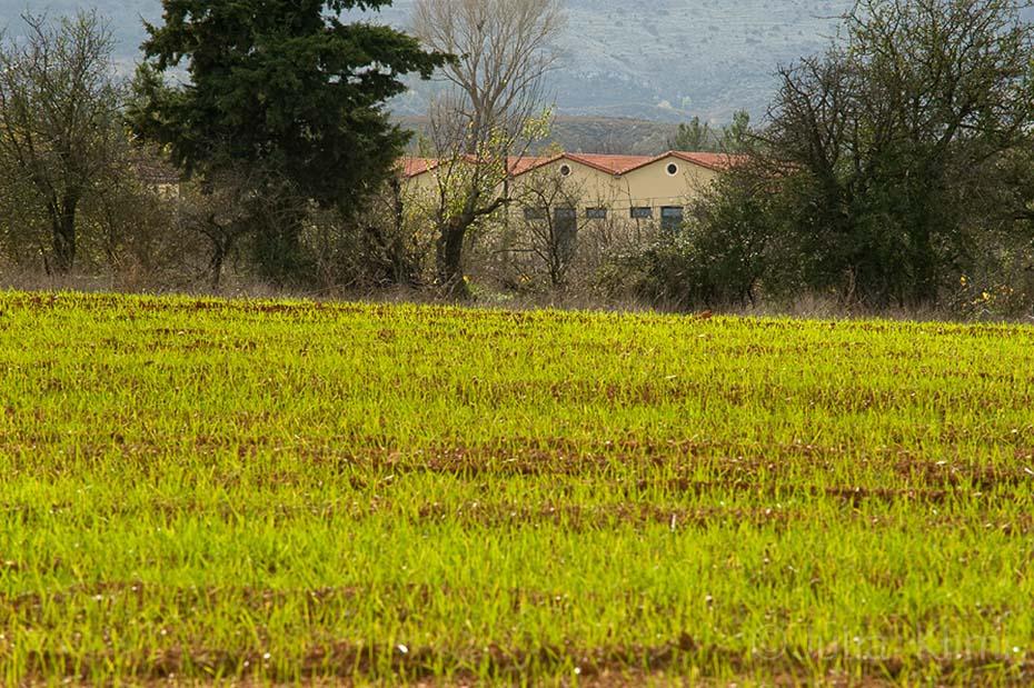 DSC_6969 Tselepos winery