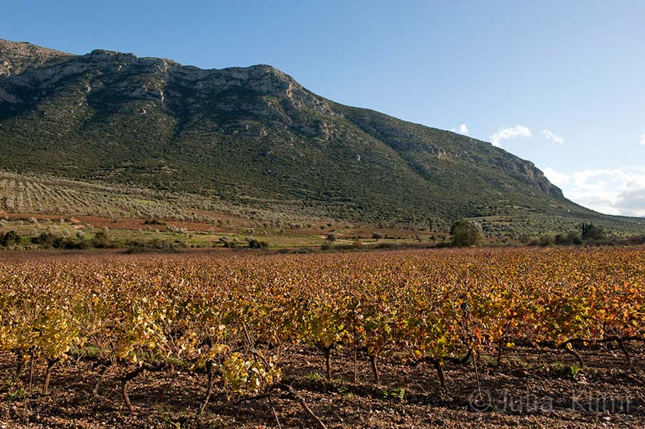 DSC_7339 Nemea's vineyards