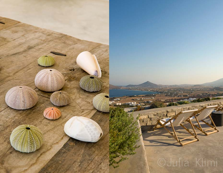 Living detail with sea urchin and shells in table