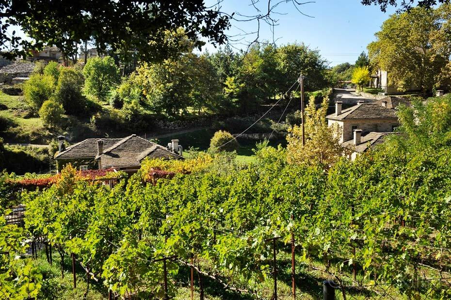 _DSC9958 Papigo vineyards
